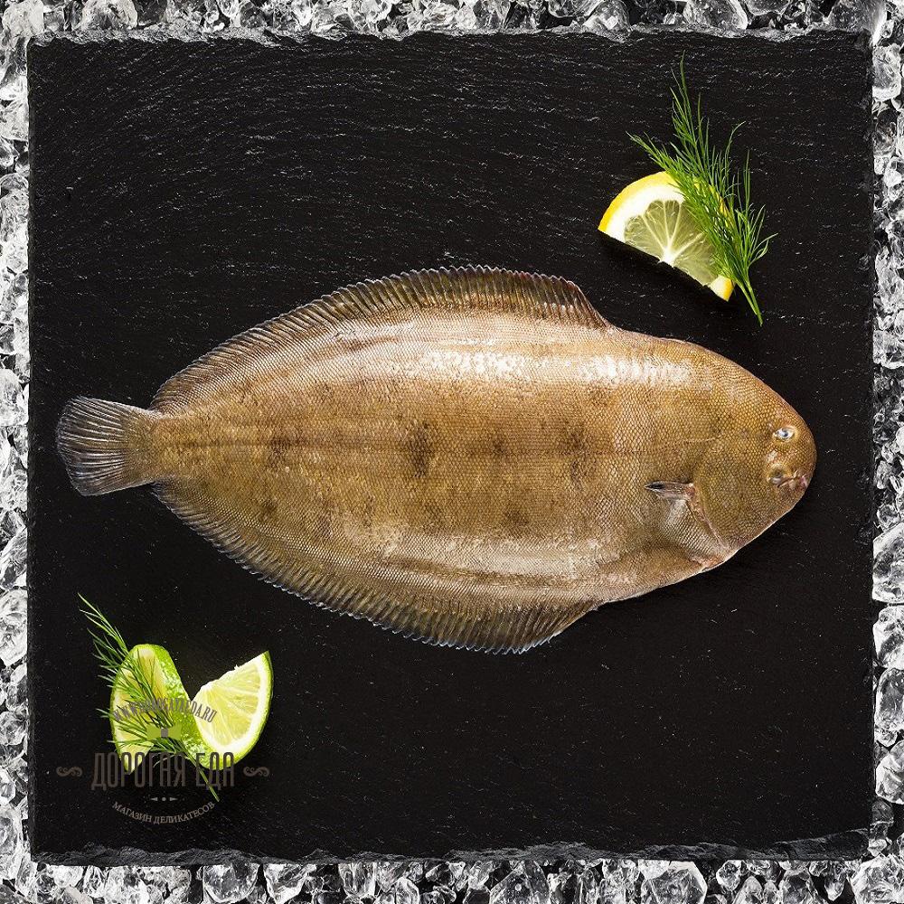фото живой рыбы морской язык